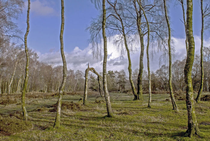 Trees and sky on moorland above Matlock, Derbyshire Dales, Uk Beauty In Nature Birch Trees Day Growth Moorland Nature No People Non-urban Scene Outdoors Scenics Shadows Sky Tranquil Scene Tranquility Tree Treescape WoodLand