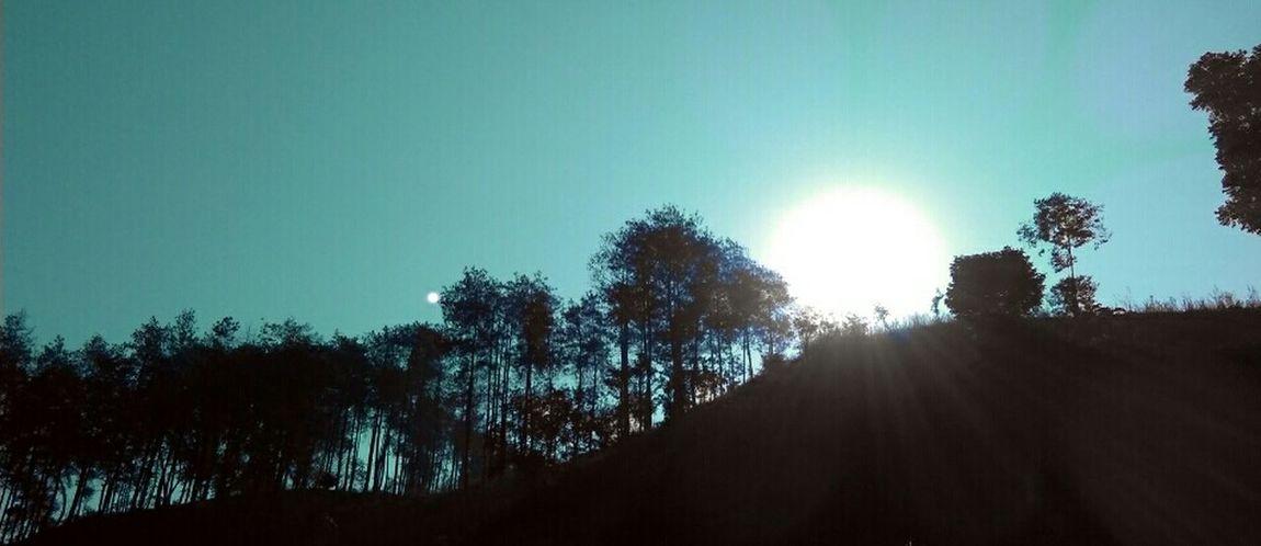 Experiment with the sun.. Rays Of Light Siluette Forest Sunshine EyeEm Best Edits Enjoying The Sun Nature EyeEm Nature Lover