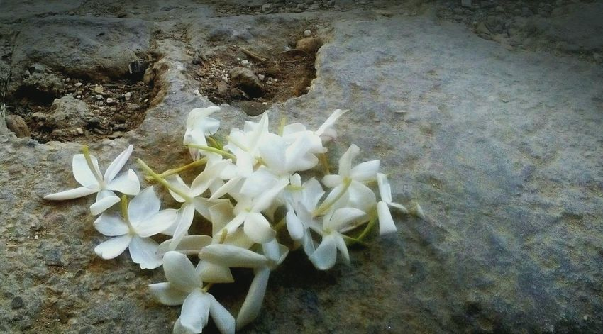 Stone EyeMeNewHere Gray Background White Color White Flower NewHere ✌🏽️😄 Detail Butiful Butiful♥ Love ♥ Jasmine Flower Jasmine Water Sea Life Beach Sand UnderSea High Angle View Close-up Animal Themes
