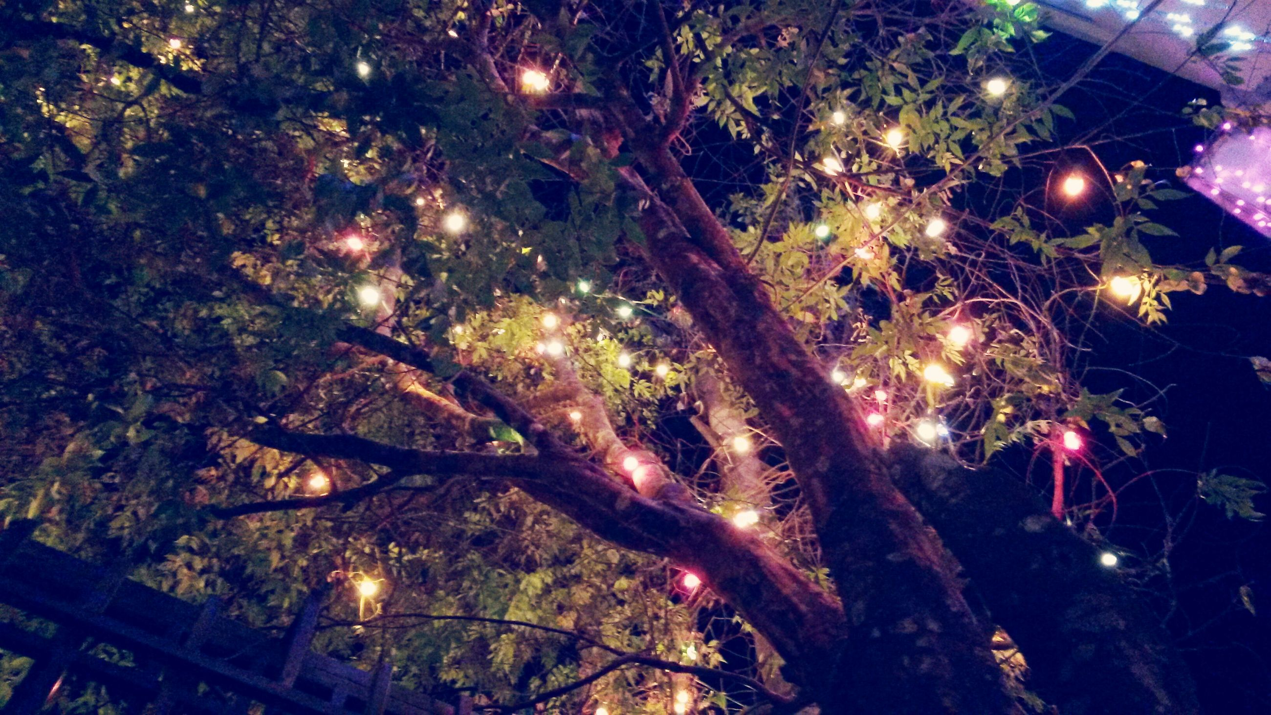 tree, low angle view, illuminated, night, branch, lighting equipment, celebration, growth, glowing, outdoors, sky, street light, nature, light - natural phenomenon, no people, lens flare, firework - man made object, beauty in nature, silhouette, hanging