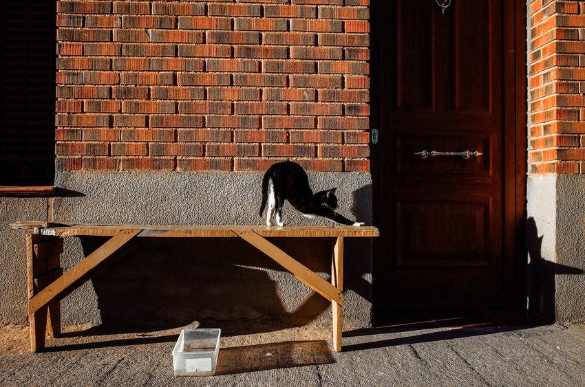 """Selfie in the morning"" Street Streetphotography Street Photography TheWeekOnEyeEM Cats Animal UNPOSED Fotogenik Collective SPAIN Lifestyles"