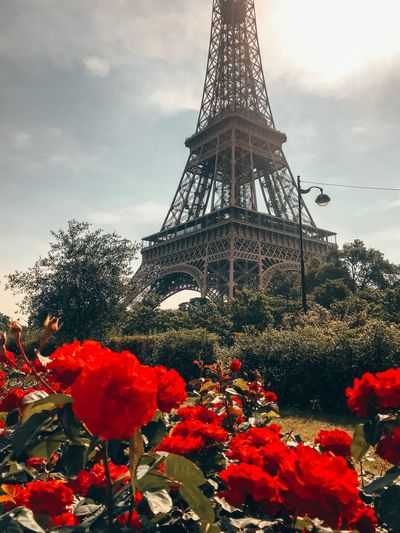 Eiffel Tower Sky Plant Tower Architecture Built Structure Cloud - Sky Nature Building Exterior Flowering Plant Travel Destinations No People Tall - High Low Angle View Outdoors Flower Tree Spire  City Red Day