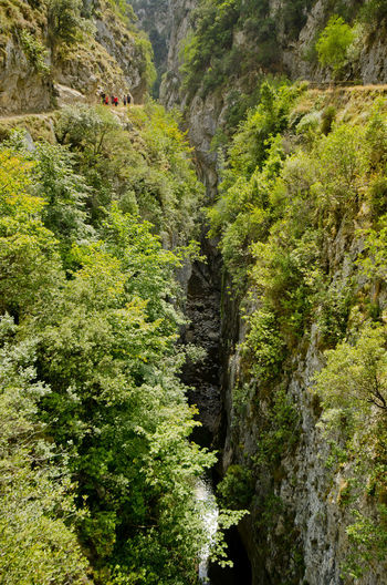 Beauty In Nature Cliff Day Exploring Forest Green Color Leading Lush Foliage Nature Outdoors Physical Geography Remote Rock Rock - Object Rock Formation Scenics Tranquil Scene Tranquility Tree Rutadelcares Picos De Europa