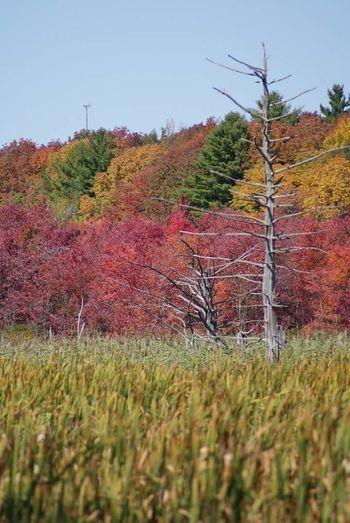 Fallscape Tree Landscape Fall