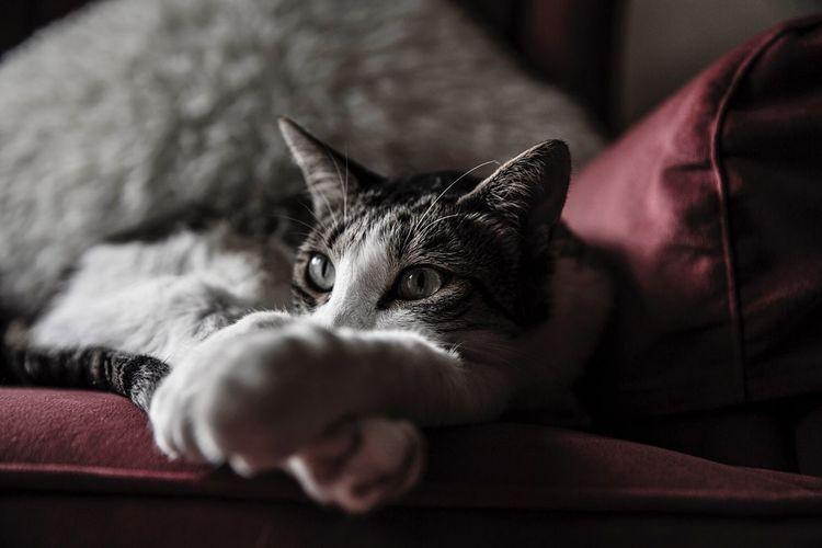 Petsets Corner]s] Corner Taking Photos Photography Catsofinstagram Cats Summer Dreaming Photooftheday