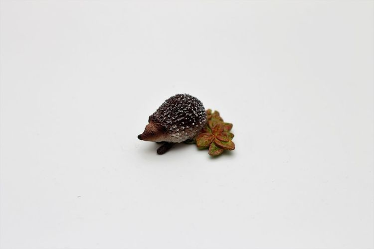 Schleichtiere Hedgehog Childrens Toys Hartgummi Spielzeug Schleich Schleich Animals Schleich Tiere Schleichtiere Schleichtiere Hedgehog Schleichtiere Igel Schleichtiere Rodent Schleichtiere Spielzeug Schleichtiere Toys Spielzeug Spielzeug Tiere Spielzeugfiguren Spielzeugfotografie Spielzeugtiere Toyphotography Toys