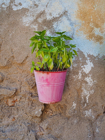 High angle view of potted plant against wall