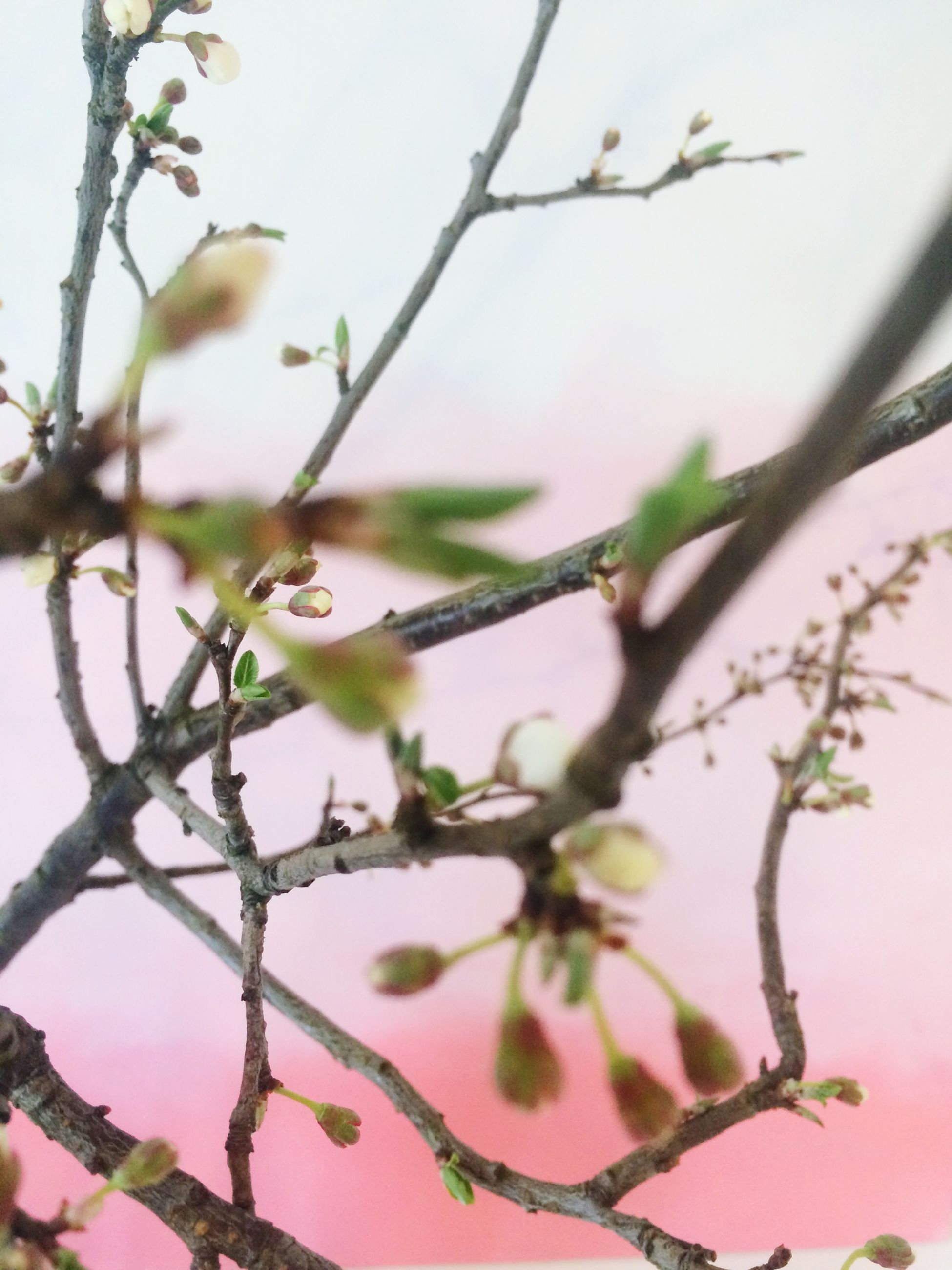 branch, one animal, animals in the wild, animal themes, wildlife, tree, bird, focus on foreground, nature, close-up, perching, low angle view, growth, twig, clear sky, beauty in nature, day, outdoors, no people, plant