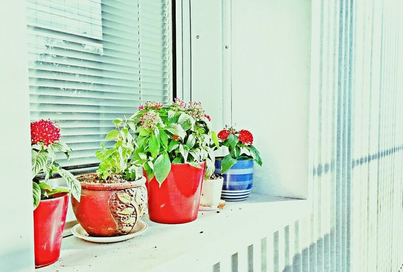 Our window sill flower pots...mom's mini garden Simplicity.  Flowerporn 25 Days Of Summer Nature_collection