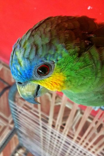 Observa a sua volta Animal Themes Multi Colored Parrot Bird One Animal Close-up Animals In The Wild Animal Wildlife Macaw No People Gold And Blue Macaw Outdoors Day Papagaio Brazil Fauna Amazonia