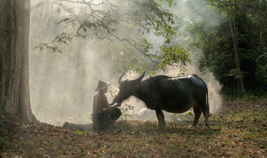 MAN WITH BULL IN FOREST