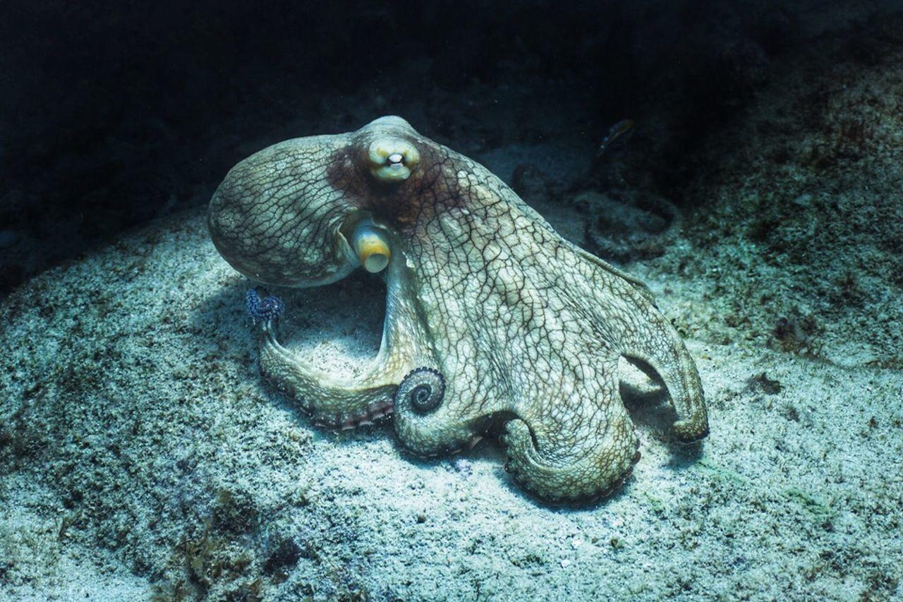 animal wildlife, animal themes, animal, animals in the wild, underwater, vertebrate, sea, sea life, undersea, marine, water, swimming, no people, nature, one animal, rock, fish, rock - object, solid