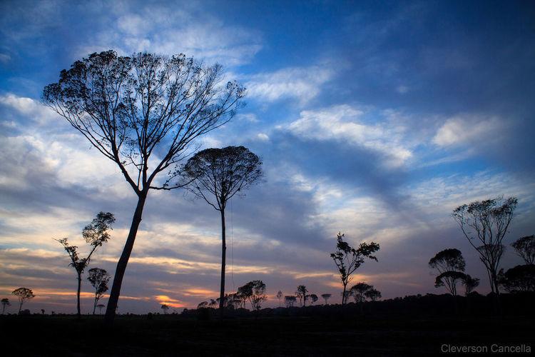 Taking Photos Beautiful Sunset Nature SantaIzabeldoPará