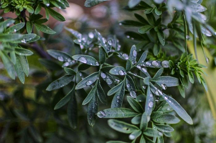 Ruta Jardin EyeEm Nature Lover Coelemu In The Rain Lluvia Chile Rainy Day Rain Garden Gotas Gotas De Lluvia Nature