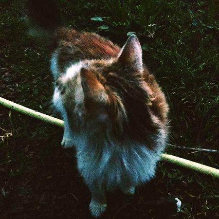 Cat Garden Wild Cat Background
