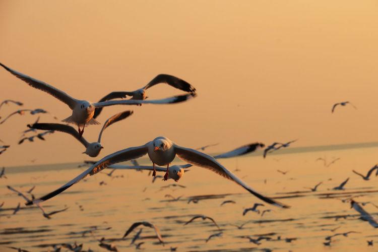 Segull Flying