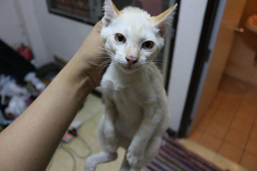 Cat Pets Cat Lovers Babycat🐱 Babycat Portrait Huawei P9 Plus