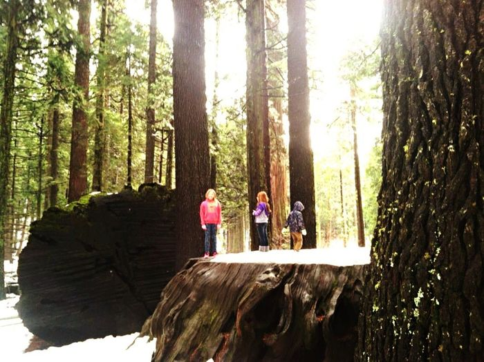 JCG. Check This Out Beautiful California Beautiful Nature Big Trees