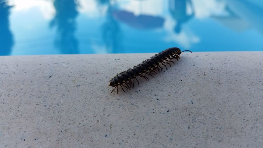 High angle view of centipede on pool side