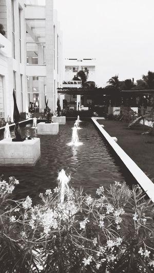 Soft and hard Architecture Water Reflection Modern Boardwalk