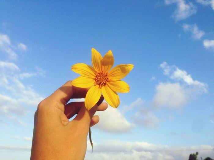Mi meta siempre será el Cielo 💜 Flower Nature Flower Head Venezuelaes Beautiful