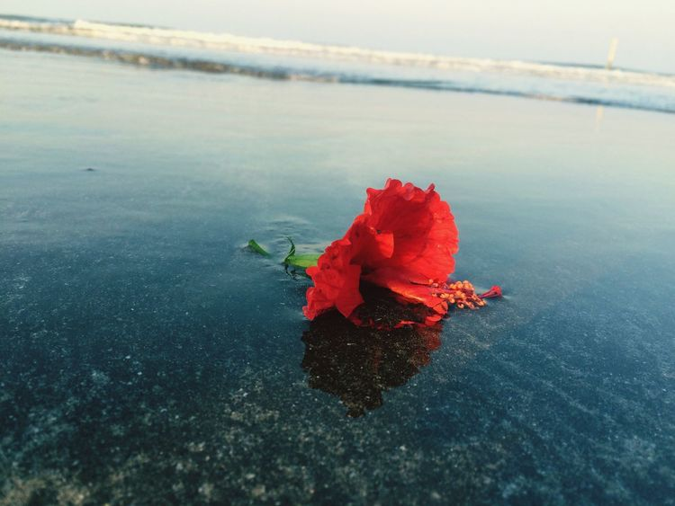 All alone and abandoned.... Beauty In Nature Water Nature Sea Red No People Tranquility Day Scenics Outdoors Tranquil Scene Leaf Beach Fragility Horizon Over Water Close-up Sky Lonely Abandoned Places Flower Eyem Vision