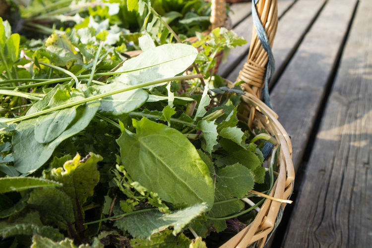 Leaf Food And Drink Plant Part Basket Food Freshness Healthy Eating Vegetable No People Nature Container Green Color Wellbeing Plant Day High Angle View Wood - Material Outdoors Close-up Wicker Herb Gardening Leaves