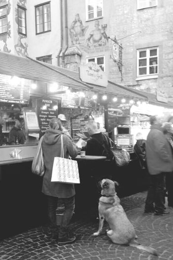 Innsbruck Christmas Market Cute Doggy Loyalty or just Waiting In Line Food