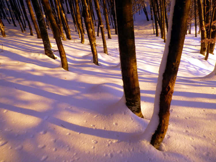 Winter Woods Cold Temperature Forest Landscape Shadows Snow Tree Tree Trunk Winter