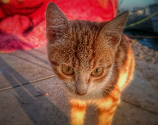 Close-up portrait of brown kitten on footpath