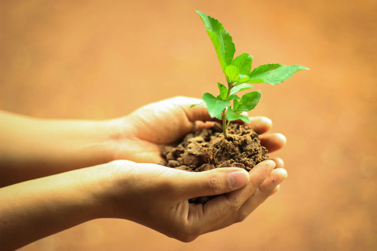 Beginnings Body Part Care Finger Focus On Foreground Gardening Green Color Growth Hand Herb Human Body Part Human Hand Human Limb Leaf Lifestyles Nature One Person Plant Small