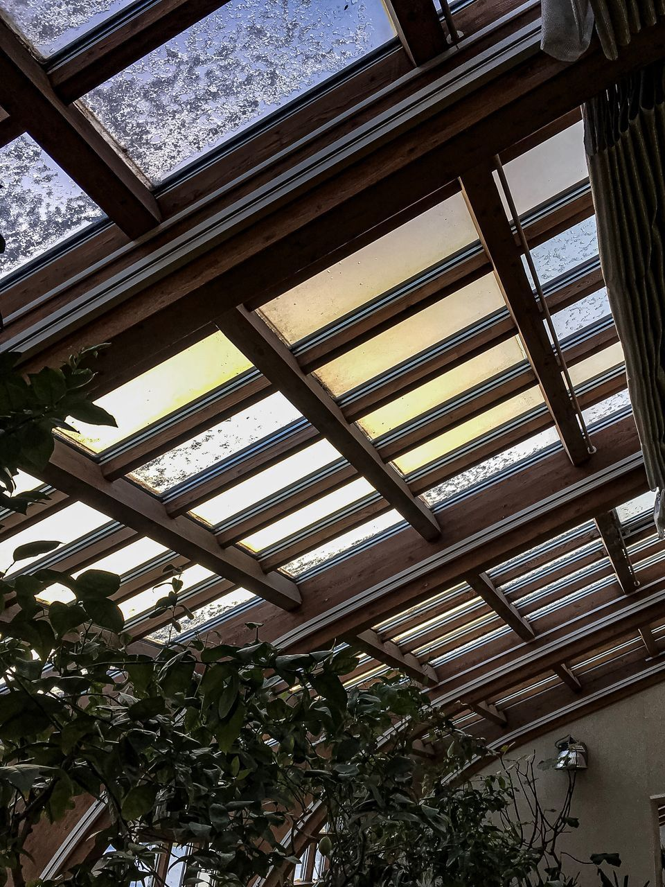 low angle view, indoors, ceiling, plant, architecture, no people, day, built structure, roof, nature, tree, growth, window, building, pattern, roof beam, lighting equipment, glass - material, leaf, skylight, glass