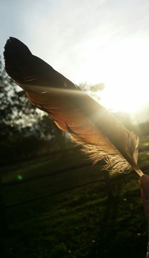 Sky Grass Sun