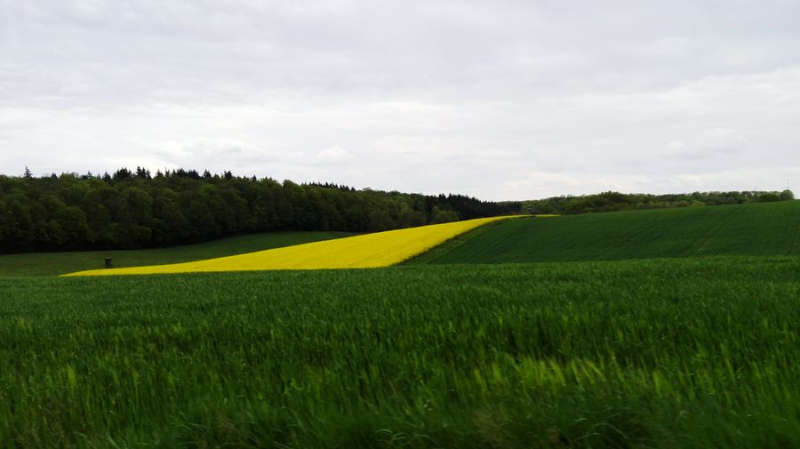 Tree Rural Scene Agriculture Field Cereal Plant Crop  Sky Landscape Cloud - Sky Grass Oilseed Rape Agricultural Field Patchwork Landscape Plantation Cultivated Land