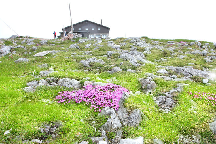 Beauty In Nature Blooming Cottage Day Flower Fragility Grass Green Color Hill Landscape Mountain Mountain Range Nature No People Non Urban Scene Non-urban Scene Outdoors Plant Remote Rock Scenics Schneeberg Sky Tranquil Scene Tranquility