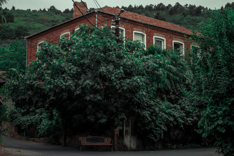 Low angle view of trees and building