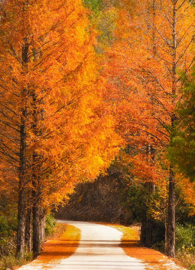 autumn road Autumn Tree Plant Change Orange Color Nature Beauty In Nature Road Autumn Collection Fall