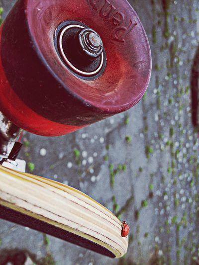 Ladybug Skateboard
