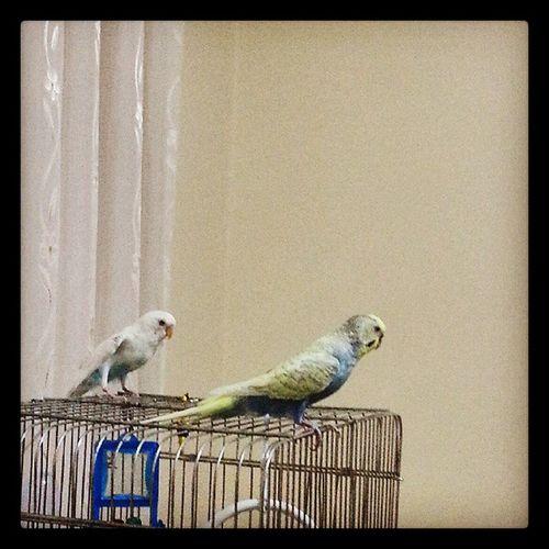 Bird Vscocam Photo Likes VSCO özçekim Selfie Instamood Foto Muhabbetkusu Kus