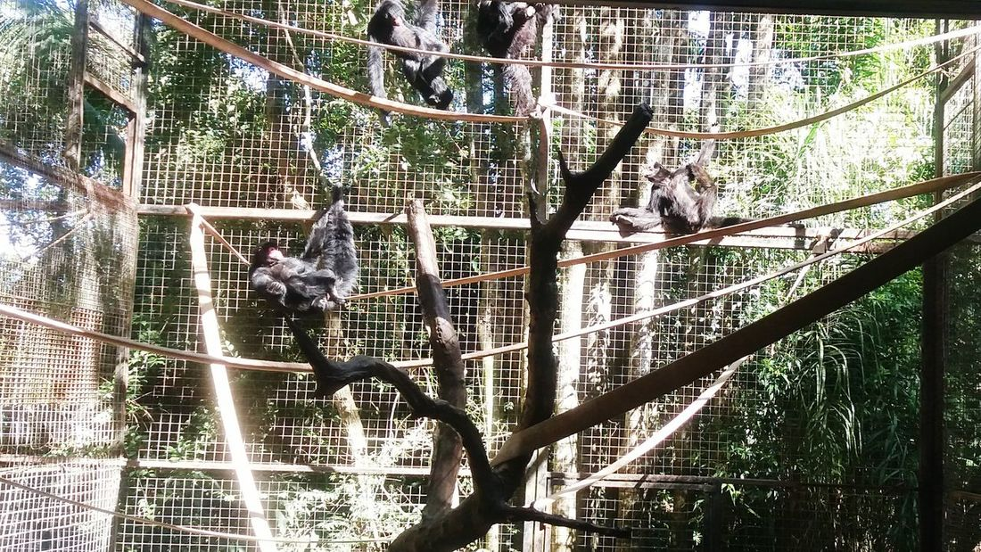 EyeEm New Here Monkeys Animal Themes Wild Sunlight Beauty In Nature Outdoors No People Zoo Macaco Prego EyeEmNewHere