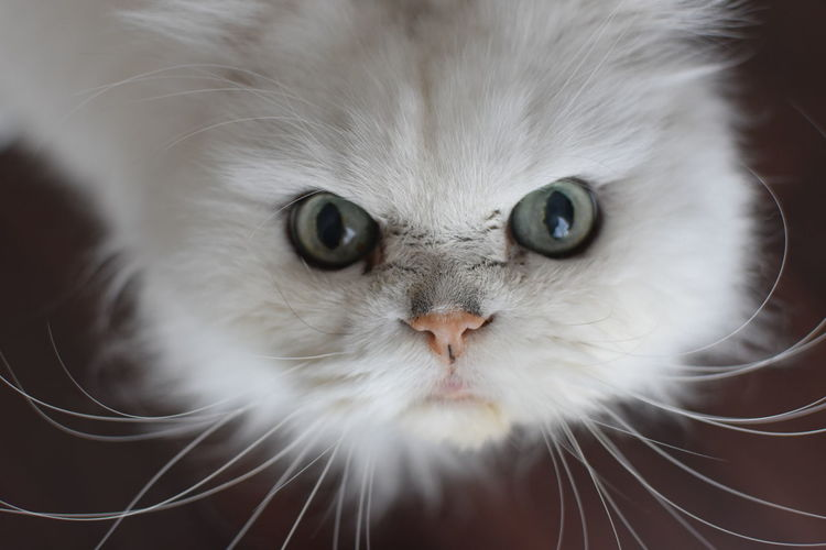 Close-up portrait of a cat