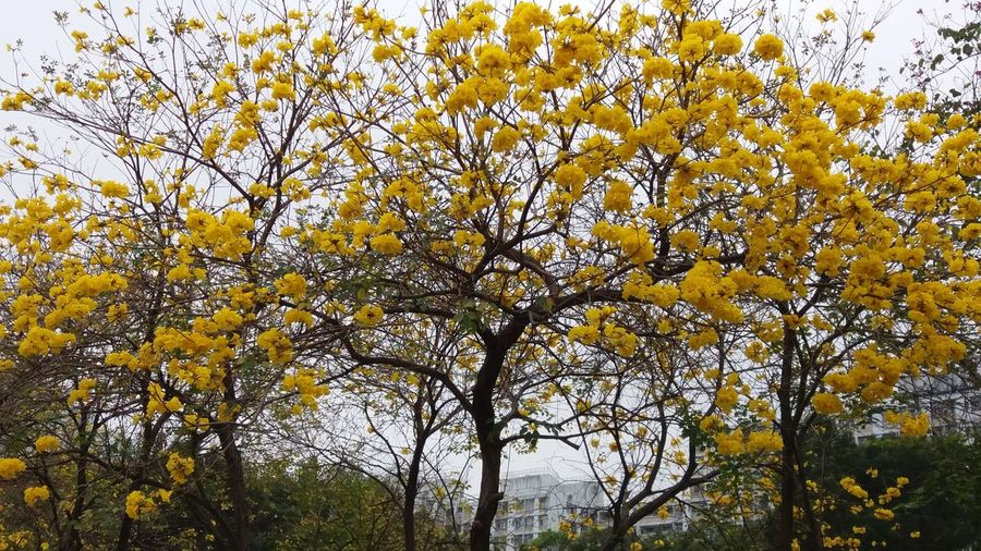 Nature Tree Beauty In Nature Backgrounds Outdoors Flower Beauty Nam Cheong Park Kowloon