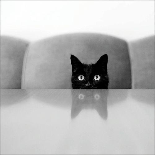 Gooodnıght Cat♡ Mabelmatiz Gel