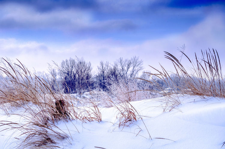 Beautiful winter dunes on the shores of Lake Michigan in the USA Winter Snow Cold Temperature Plant Sky Beauty In Nature Tranquility Scenics - Nature Cloud - Sky White Color No People Nature Tranquil Scene Tree Bare Tree Land Environment Landscape Day Outdoors Marram Grass Snowcapped Mountain Great Lakes Seasonal Lake Michigan Dunes