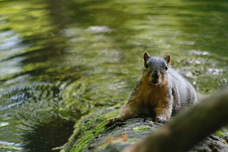 One Animal Water Animals In The Wild Animal Themes Nature Animal Wildlife Day Outdoors Mammal No People Squirrel Close-up