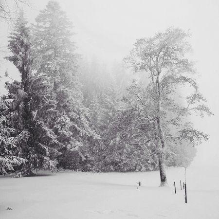 Landscape Nature EyeEmSwiss Enjoy The Silence Snow Winter