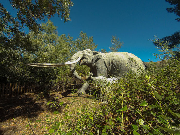 View of elephant in forest