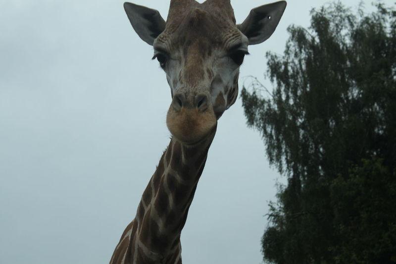 Serengeti-Park, Hodenhagen