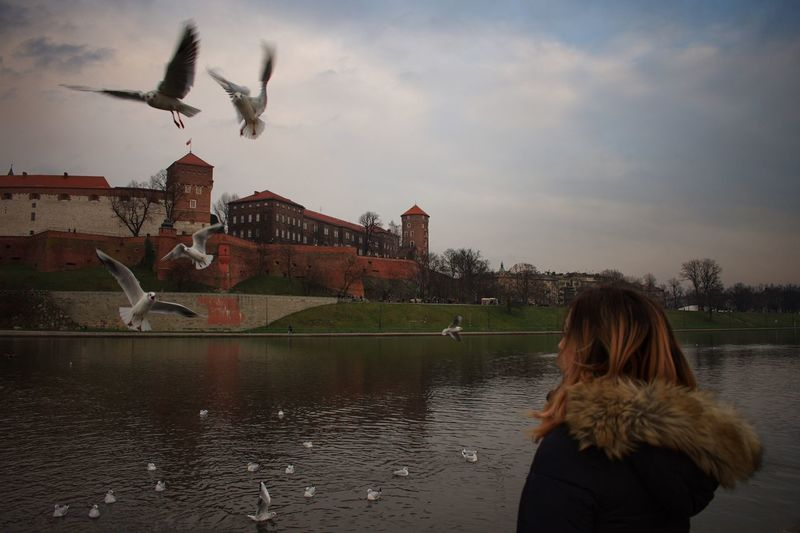 Feeding the birds Krakow Castle Feeding The Birds Bird Flying Animals In The Wild Large Group Of Animals Animal Wildlife Architecture Built Structure Flock Of Birds Spread Wings Nature Outdoors