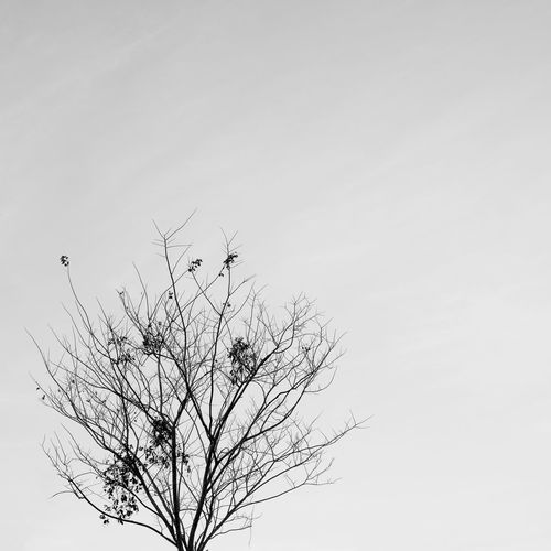 Black and white silhouette of tree in winter Bare Tree Sky Tree Plant Branch No People Tranquility Copy Space Beauty In Nature Clear Sky Nature Scenics - Nature Day Outdoors Silhouette Black And White Minimal Nature Silhouette